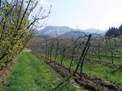 Organic orchards in France